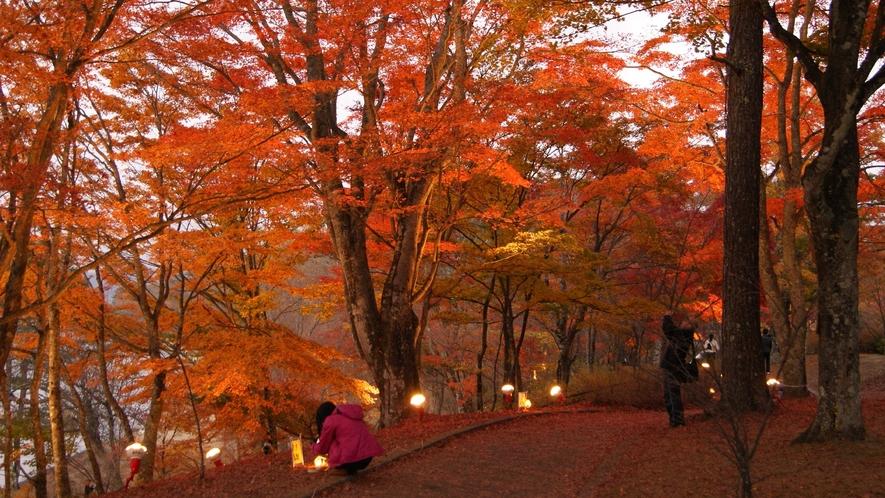 自然林の紅葉祭り。