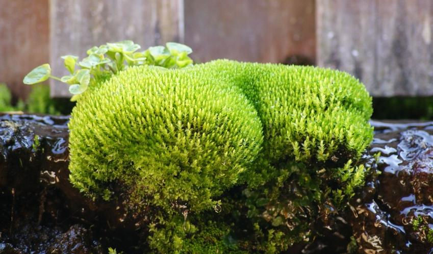 露天風呂の苔。