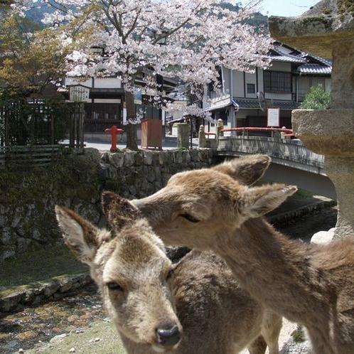 鹿と桜500