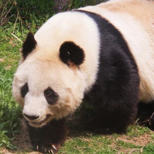 上野動物園も徒歩5分♪
