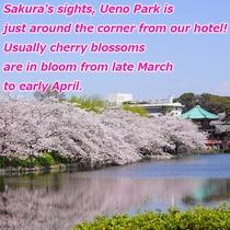 桜の名所、上野公園はすぐそこ!見頃は例年3月下旬頃~4月上旬頃。