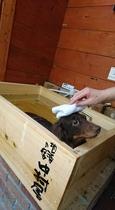 ワンチャン専用ひのき露天風呂
