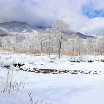 *周辺観光/イモリ池冬の風景