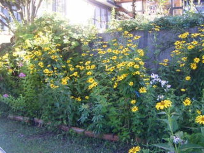 駐車場を囲む花壇
