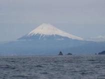 船釣りで雲見沖に行きました。富士山が目の前で釣りができるなんて幸せ!