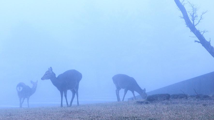 ☆【施設からの眺望】野生の鹿/自然豊かなホテル敷地内には野生のシカを見かけることができます
