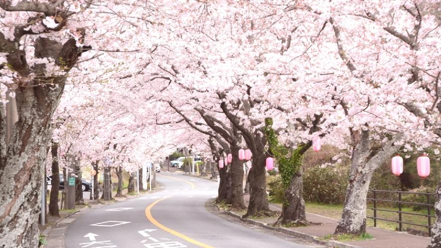 【周辺観光】伊豆高原桜並木/ホテルより車で約20分。全長約3キロにも及ぶ桜並木♪