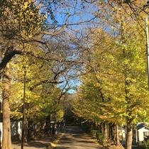 【柏公園】紅葉風景