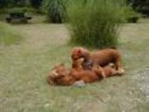 庭で2匹のワンちゃん