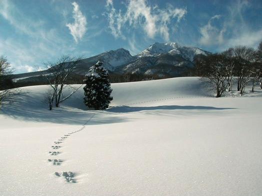 春スキー冬の謝恩エコノミープラン