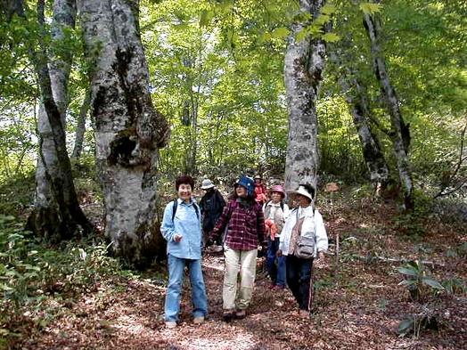 【体験】清々しい妙高の森で森林セラピー体験ストレス解消プラン