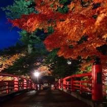 *【紅葉(一例)】ライトアップされ、夜に映える紅葉。