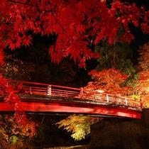 *【紅葉(一例)】ライトアップされた中野もみじ山の紅葉。
