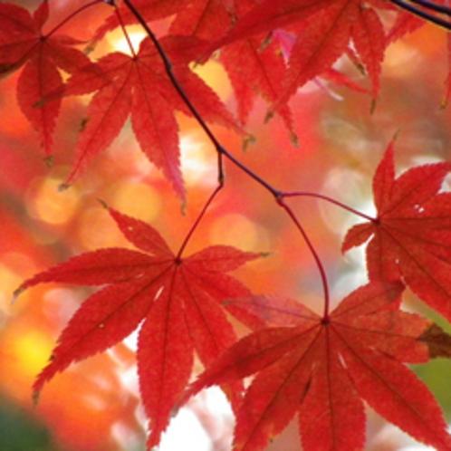 諏訪湖周辺では紅葉が見られます!