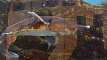 *【水槽】チョウザメなども水槽で飼育しおりお客様自身観覧することも出来ます。