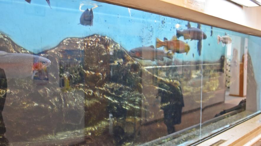 *【水槽】館内には川魚や淡水魚などの魚を展示しており水族館に来ているような気分に。