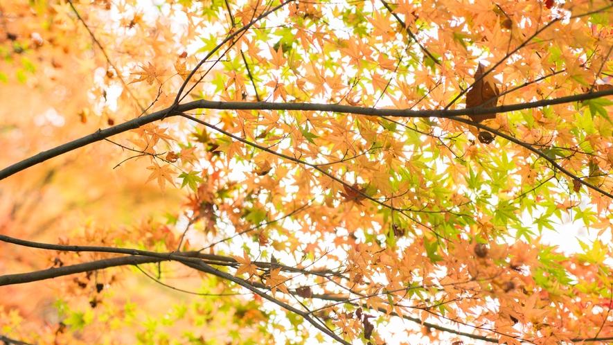 *【紅葉】深い自然の美しさと儚さ