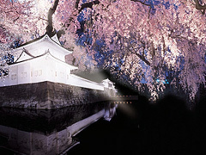 二条城ライトアップ 桜 春