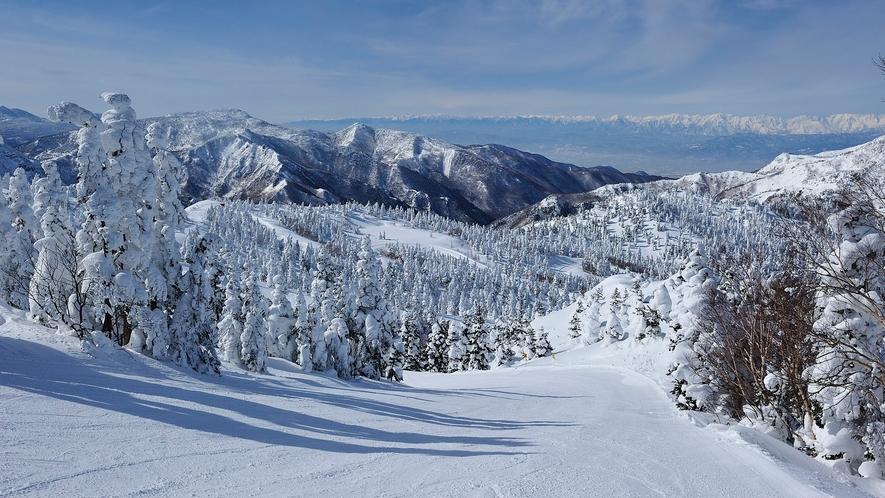 【冬】最高の雪質、志賀高原。
