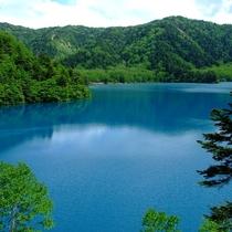 ■【夏】大沼池。どこから見ても鮮やかな青