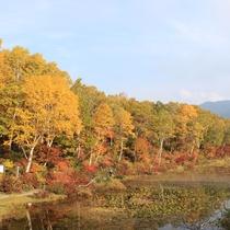 ■【秋】紅葉(蓮池)