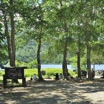 ■【夏】大沼池周辺。木陰で休憩