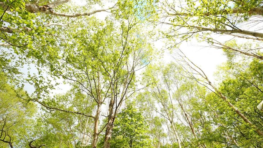 【夏】大自然の中で澄んだ空気を思いっきり吸い込んでみてください。