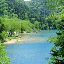 ■【夏】大沼池。浅瀬は底が透き通って見えます