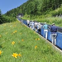 ■【夏】横手山パノラマコース。山頂からの北アルプスの眺めは絶景