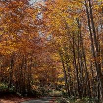 ブナ林の中を歩く散策道