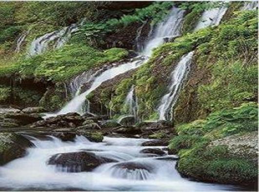 夏休み涼しさ求めて八ヶ岳高原に出かけよう!都心から2時間半・ 家族でゆっくり貸し切り風呂を満喫!