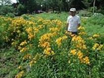 お花畑自家農園