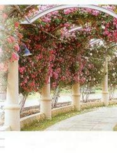 バラの花回路