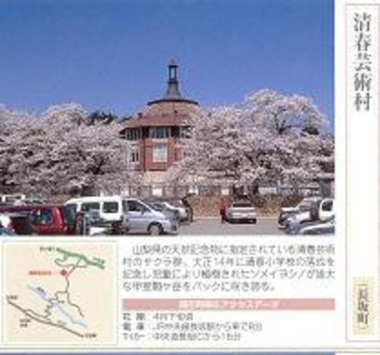お花見【桜】