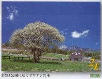 春の清里高原、