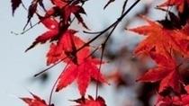 季節・秋・紅葉・アップ