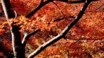 季節・秋・紅葉・全体