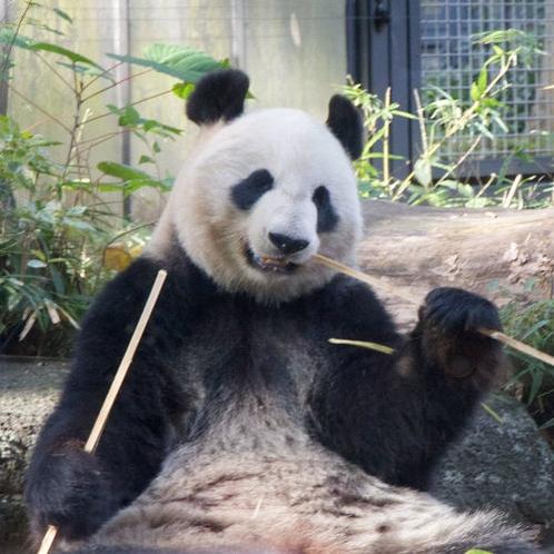 上野動物園にパンダの親子を見に行こう!
