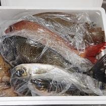 *漁師さん直送の新鮮なお魚を食べて元気に!メニューは当日のお楽しみ♪