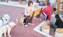 犬の足湯1