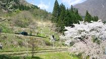 ■春には桜を眺めながらゆっくりと散策もいいですね♪