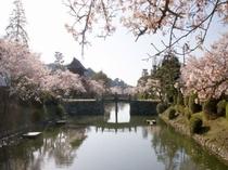 吉香公園 桜