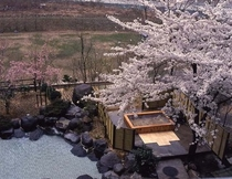 【露天桜】桜を見ながら露天風呂が楽しめます!