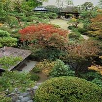 色付き始めた【秋の庭園】