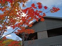 秋・コテージ紅葉