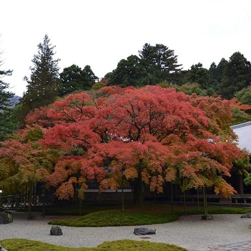 糸島観光(雷山千如寺・大楓)
