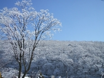 冬のある朝、外は銀世界