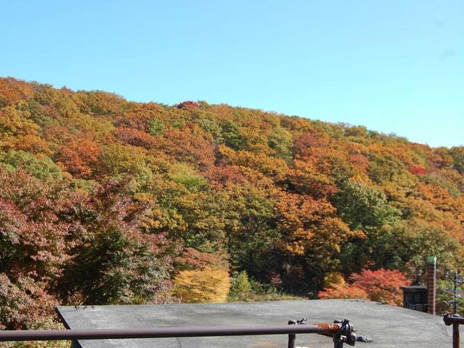 目の前に迫る紅葉の秋。