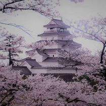 *桜満開の鶴ヶ城(会津若松)