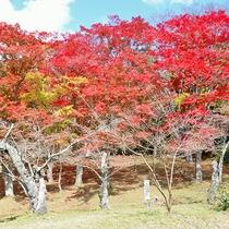 *[周辺観光]紅葉の季節は特にお勧め!秋の土津神社